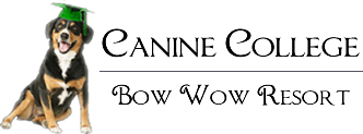 Canine College, Bow Wow Resort